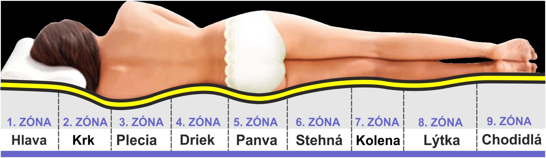anatomické zóny 9